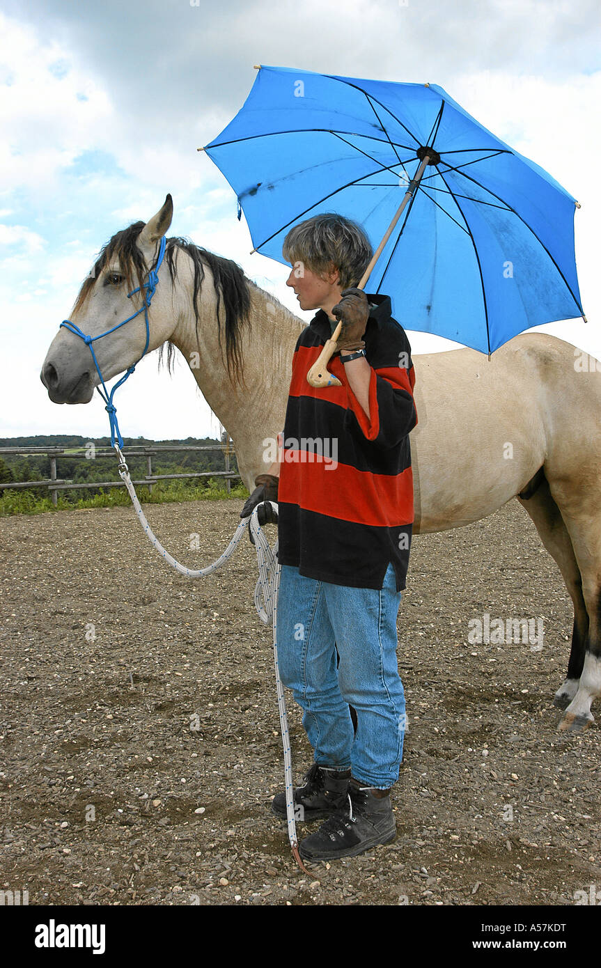Mangalarga Marchador Horse Stock Photo