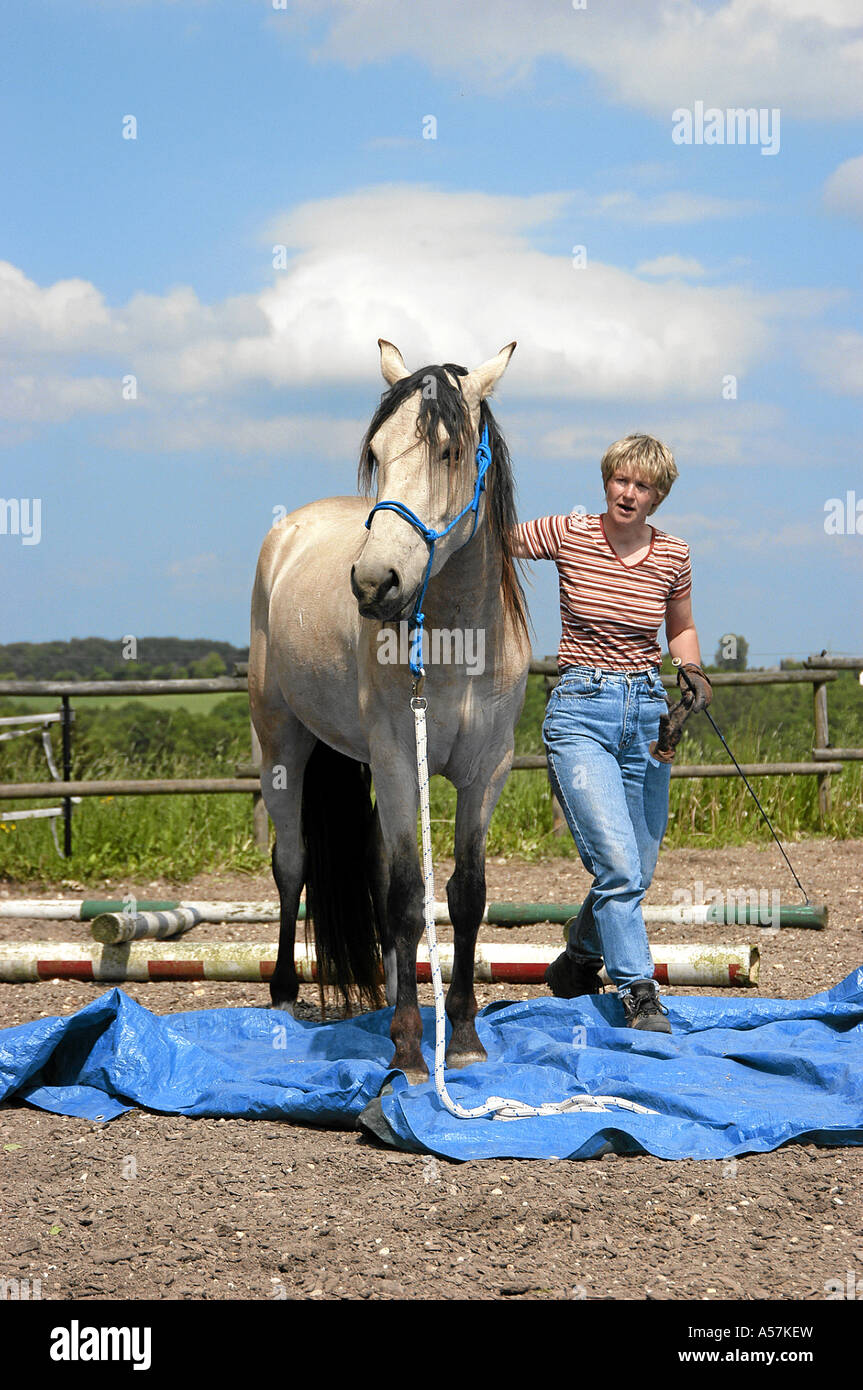 Mangalarga Marchador Horse Stock Photo