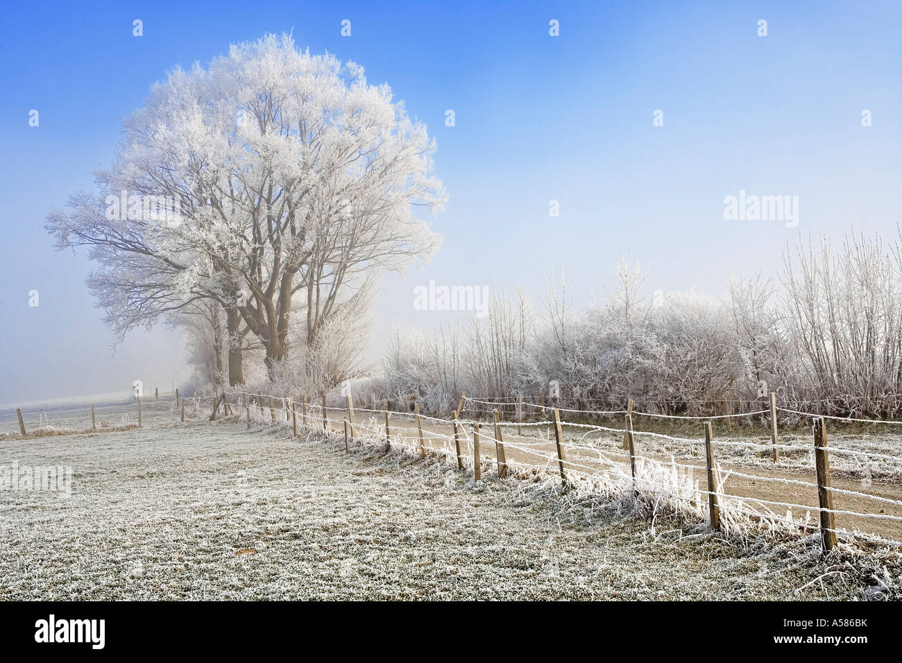 Field path in a winterly landscape with hoarfrost and fog, Sense district, Fribourg, Switzerland Stock Photo