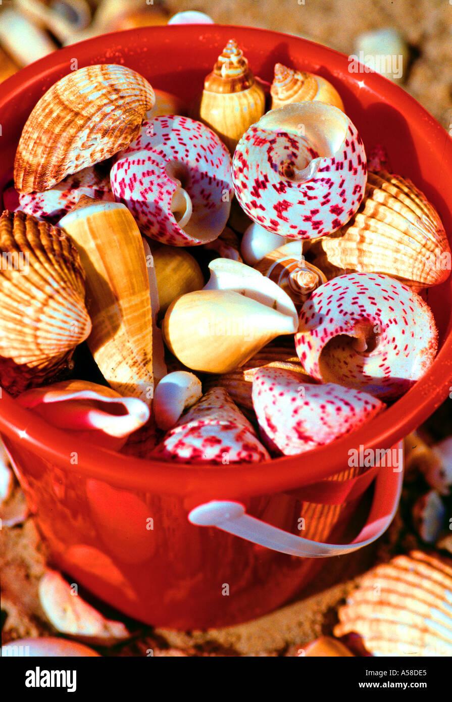 Beach, Bucket Of Shells - Stock Image