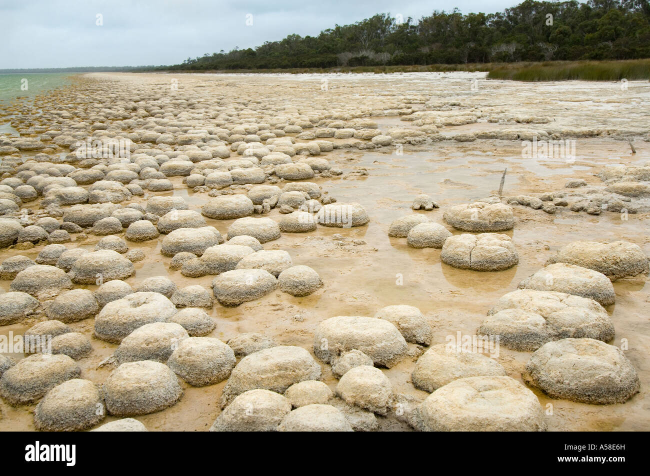 Thrombolites, 'living rock' microbialites, built by micro-organisms which produce oxygen, Lake Clifton, - Stock Image