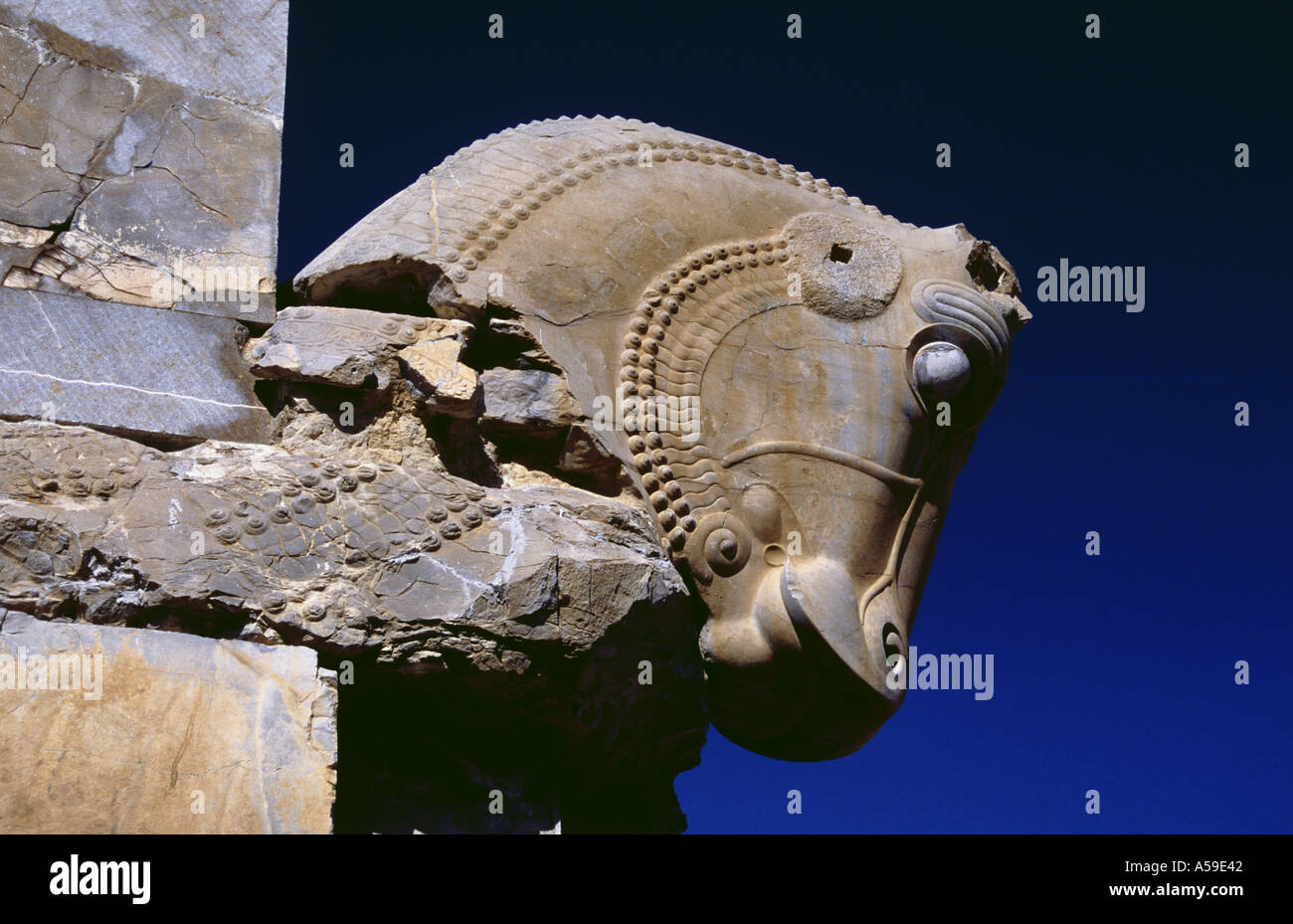 Iran Persepolis Head Of A Horse Stone Moument Stock Photo Alamy