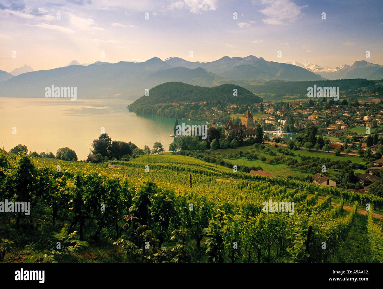 Castle, Spiez, Berner Oberland, Switzerland - Stock Image