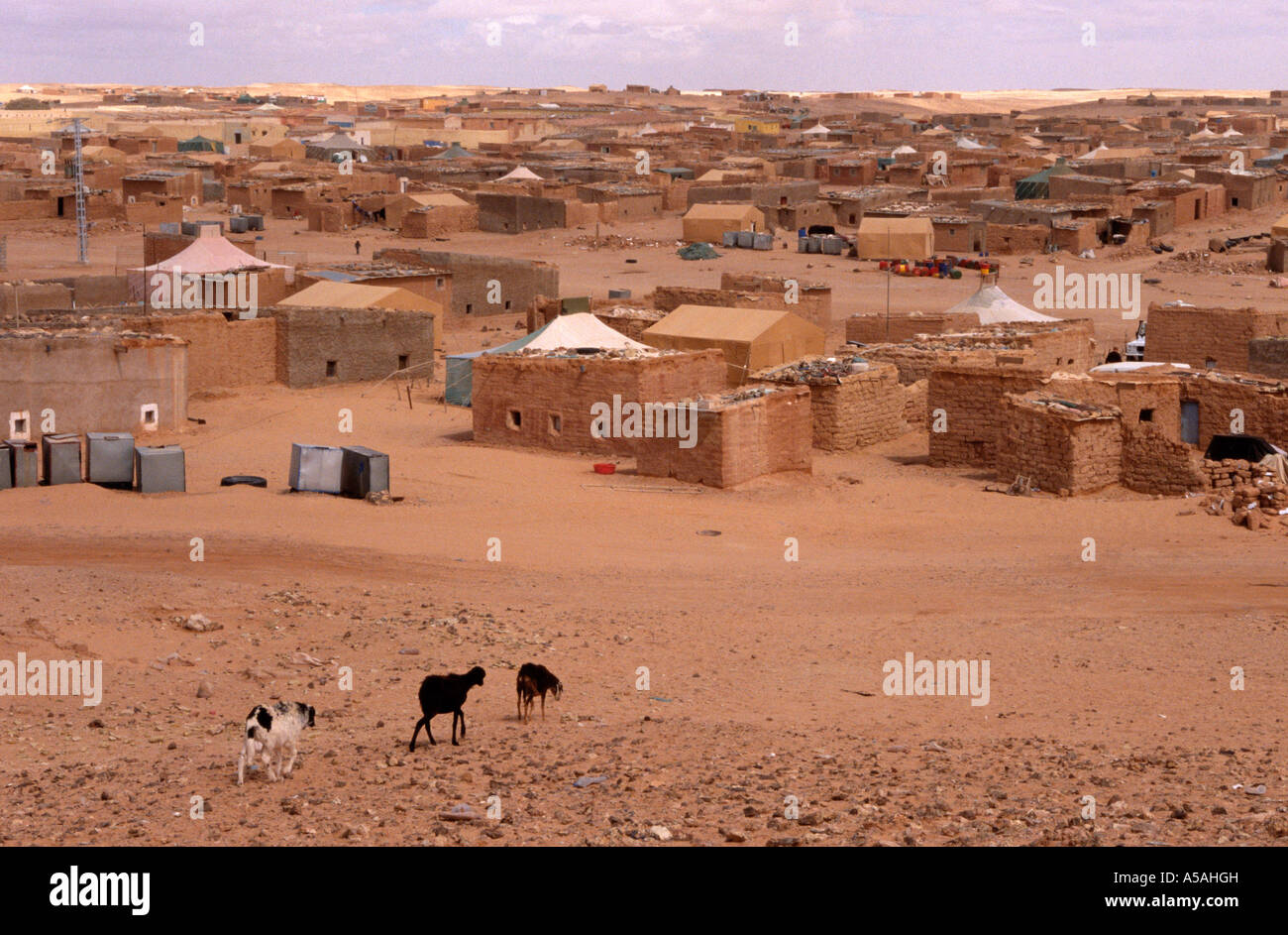 A refugee camp in Tindouf Western Algeria - Stock Image