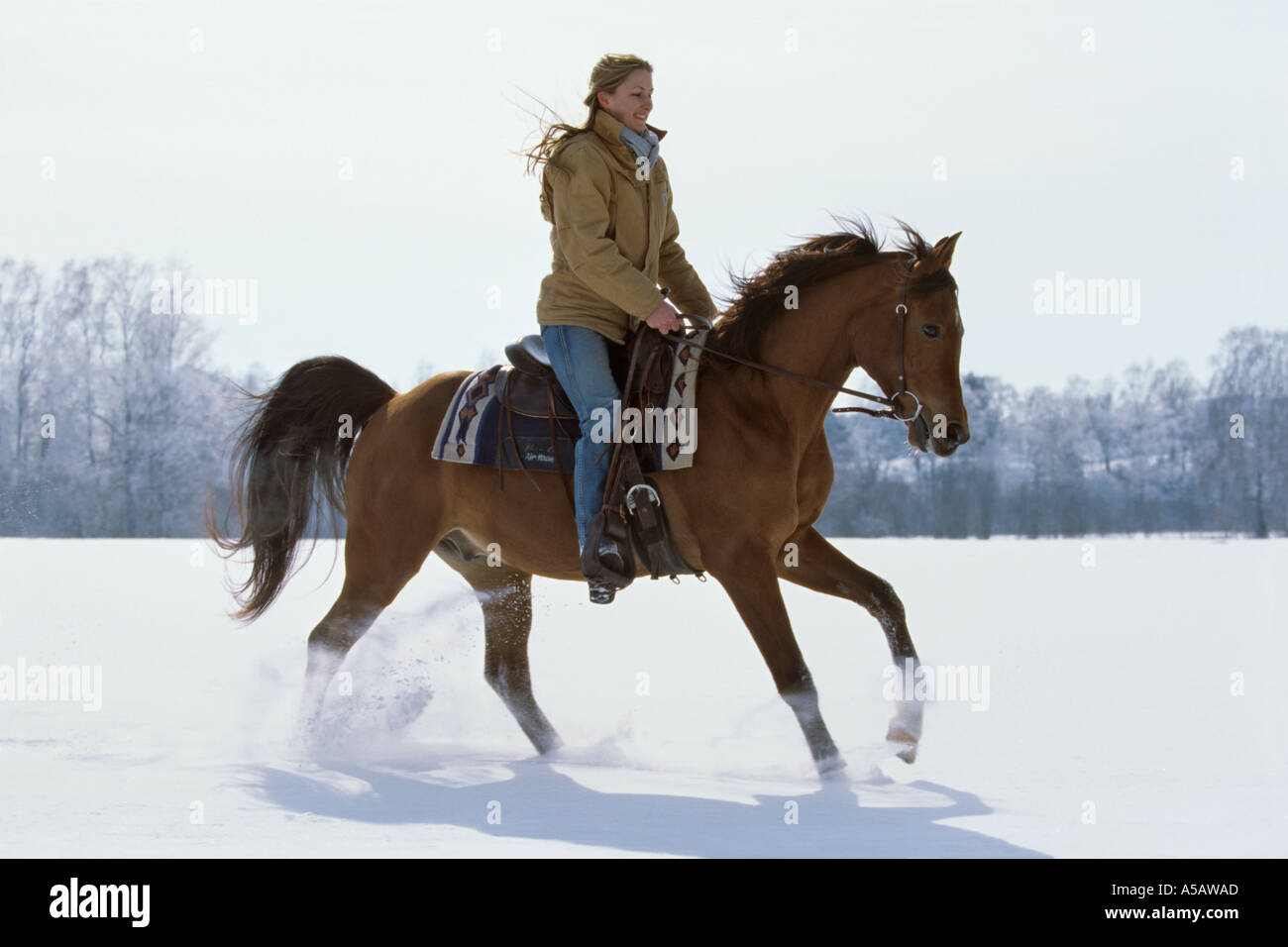 Young Rider Riding Western Style On Back Of An Arabian Horse Stock Photo Alamy