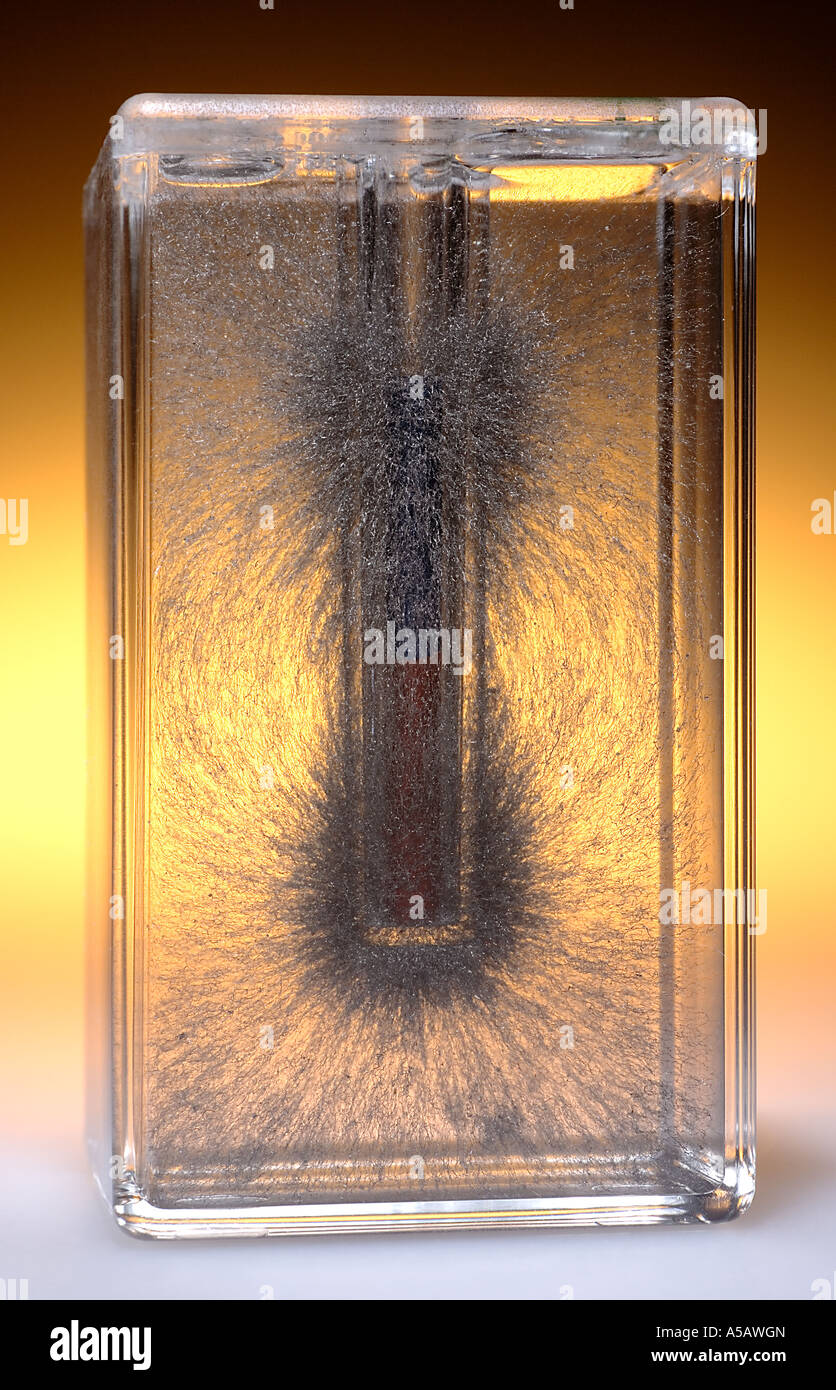 3 Dimensional Magnetic Field Iron Filings Suspended in Oil w Bar Magnet in the Center - Stock Image