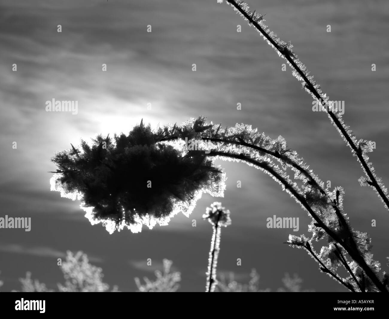 Moonlight with Ice Crystals on tree branches , Lake Myvatn, Iceland - Stock Image