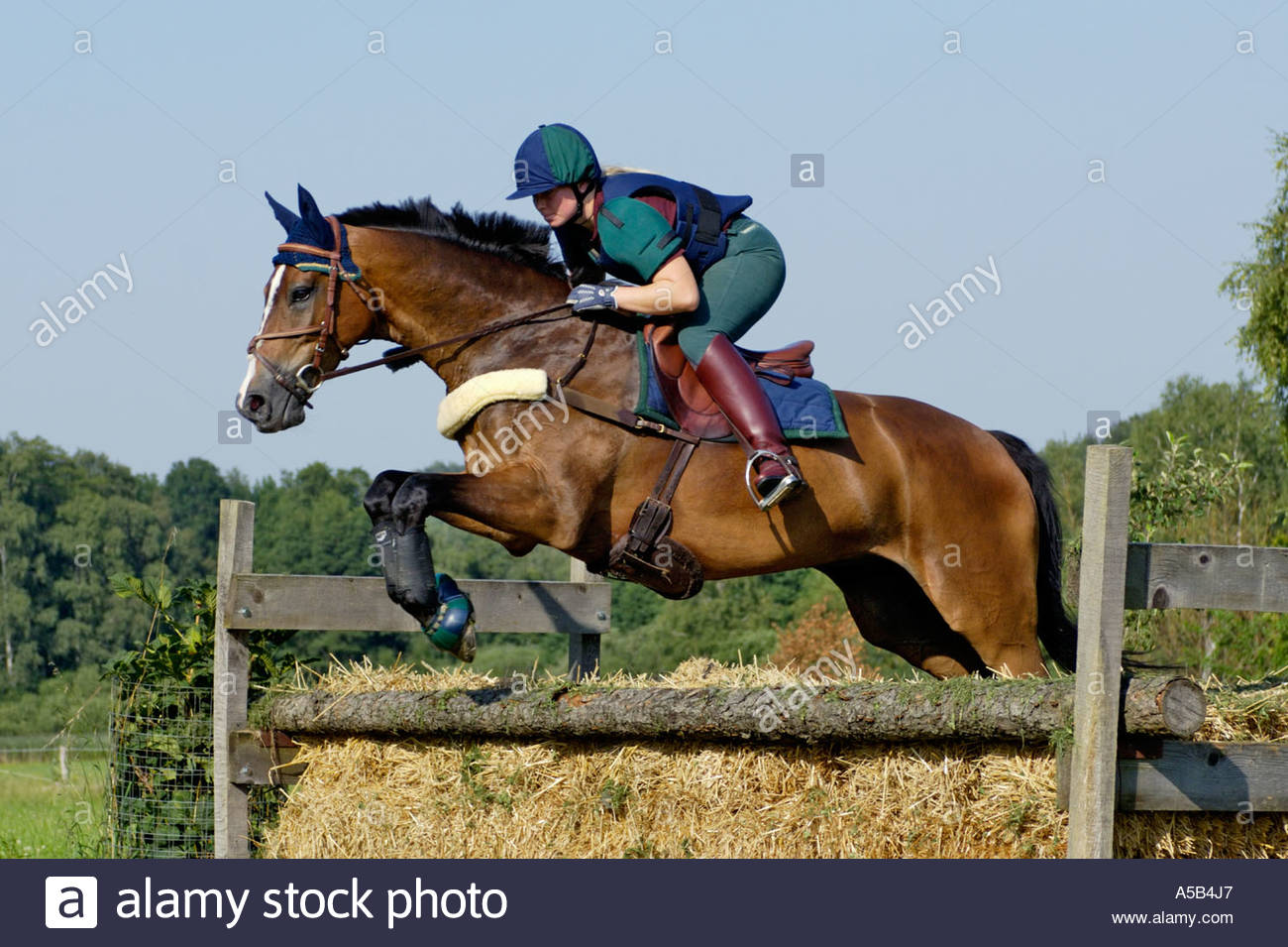 Young lady rider jumping on back of a Bavarian horse - Stock Image