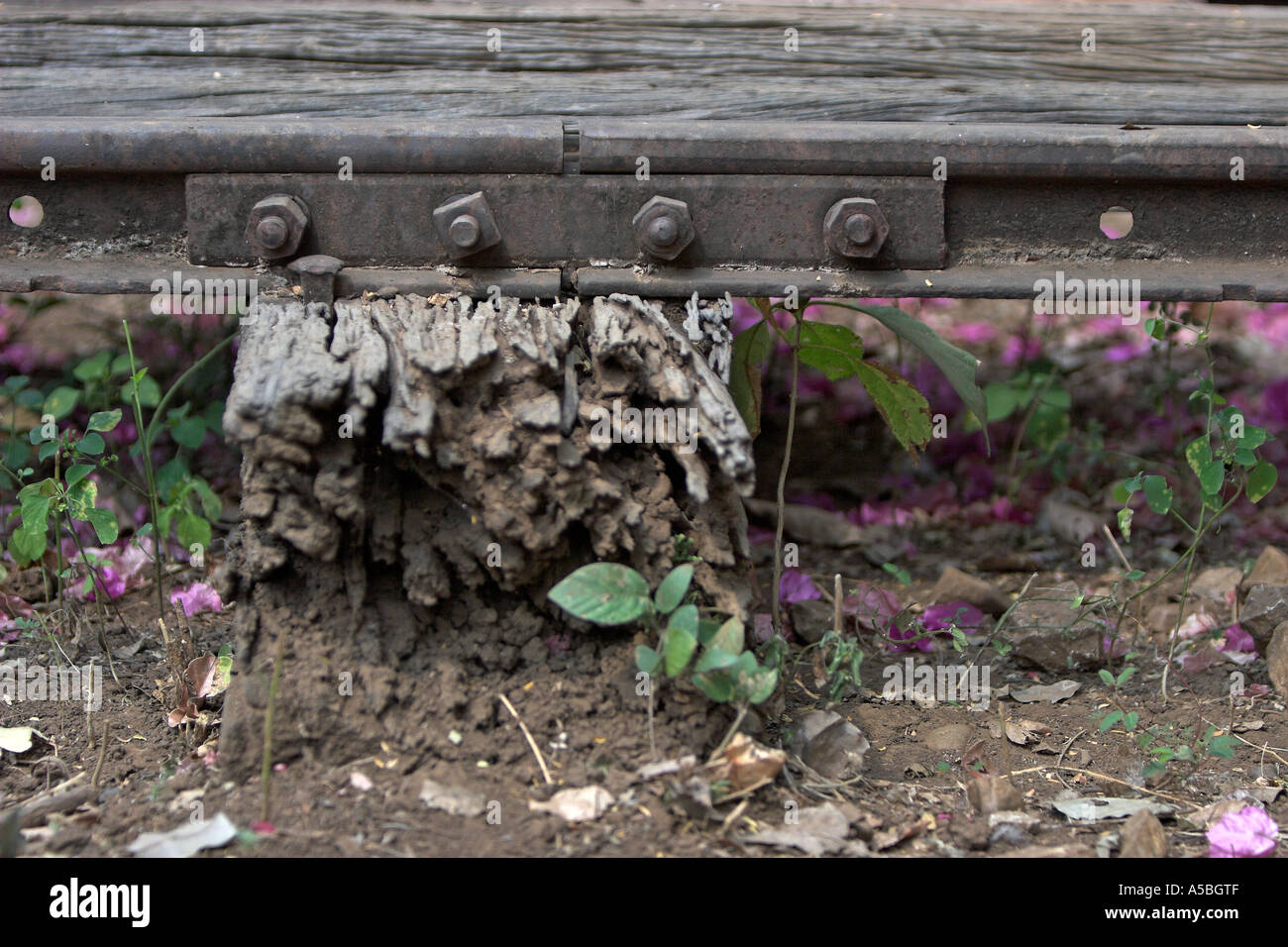 Rotting sleeper and old section of track Burma Railway Thailand. - Stock Image