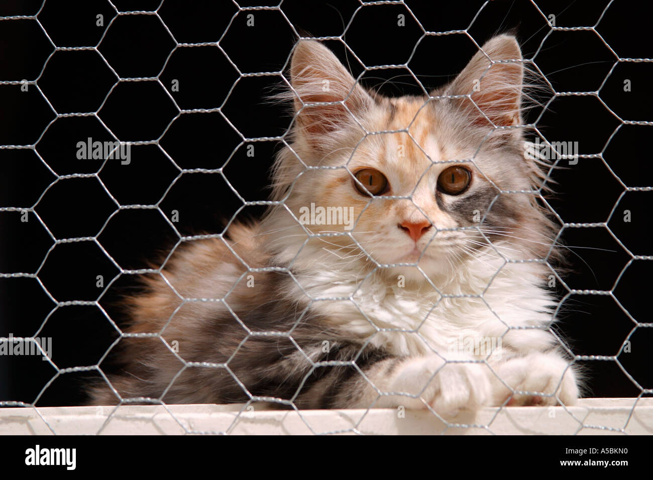 Domestic cat - Stock Image