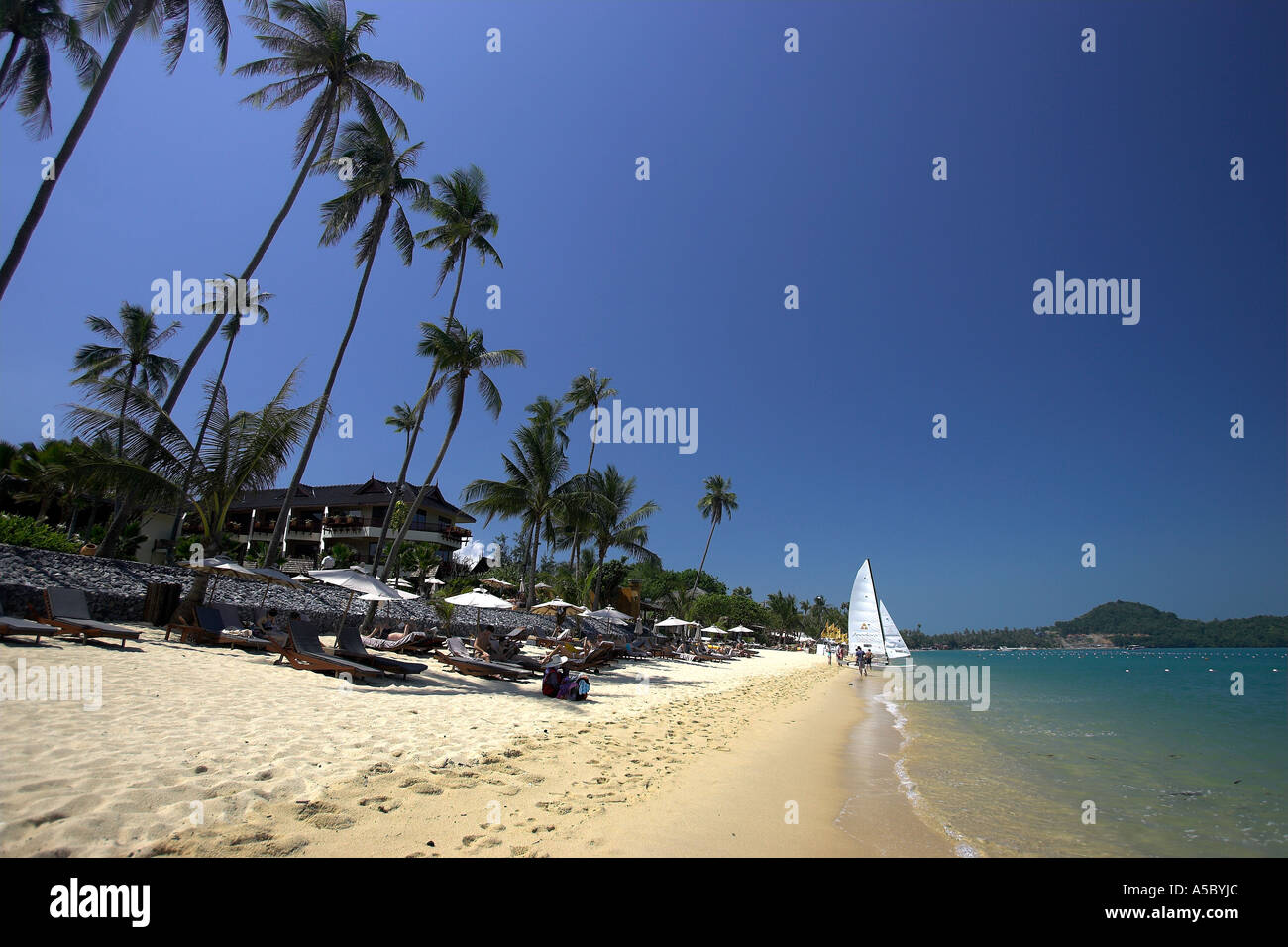 Leaning palm trees and sunshades line Bo Phut Beach as off beach catamaran is launched Ko Samui island Thailand - Stock Image
