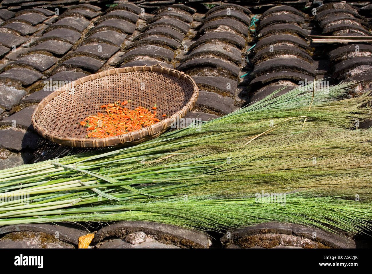 Chili and Cogon Grass for Brooms Drying on a Tile Roof Yaoqu China - Stock Image