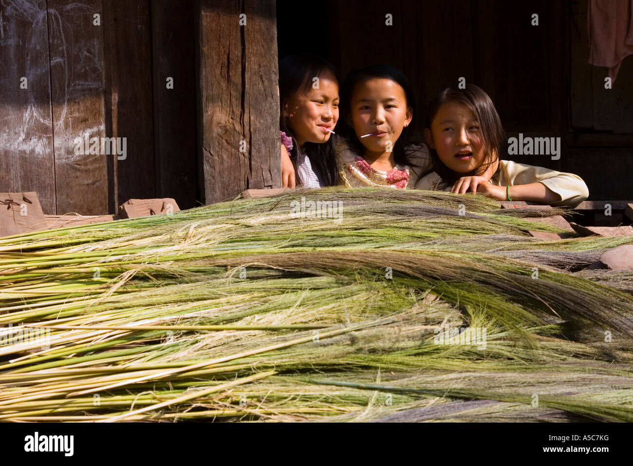 Chinese Girls and Cogon Grass for Brooms Drying in the Sun Yaoqu China - Stock Image