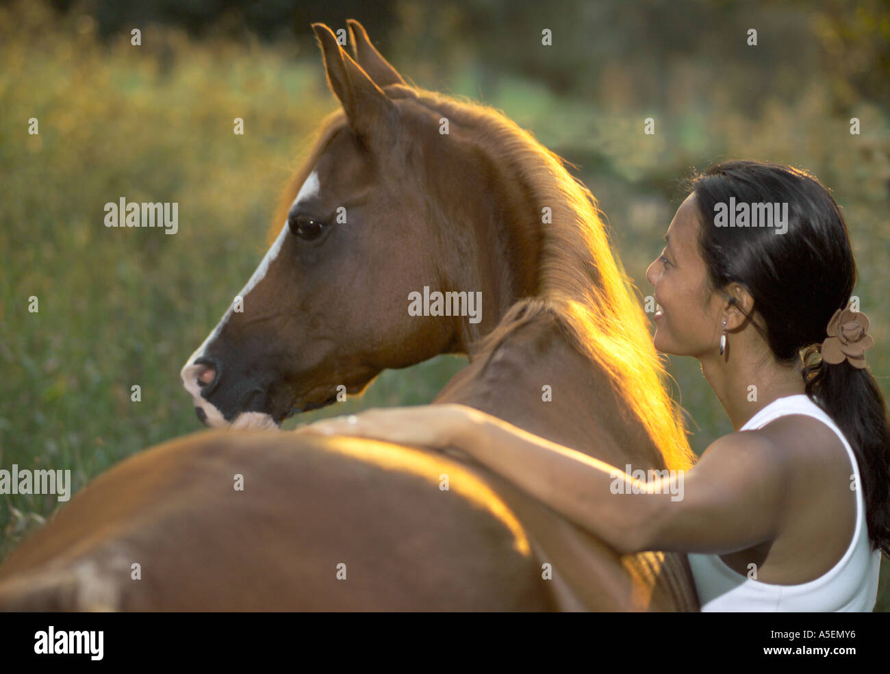 Young Asian Woman With Arabian Horse Stallion In Golden Back Lit Stock Photo Alamy