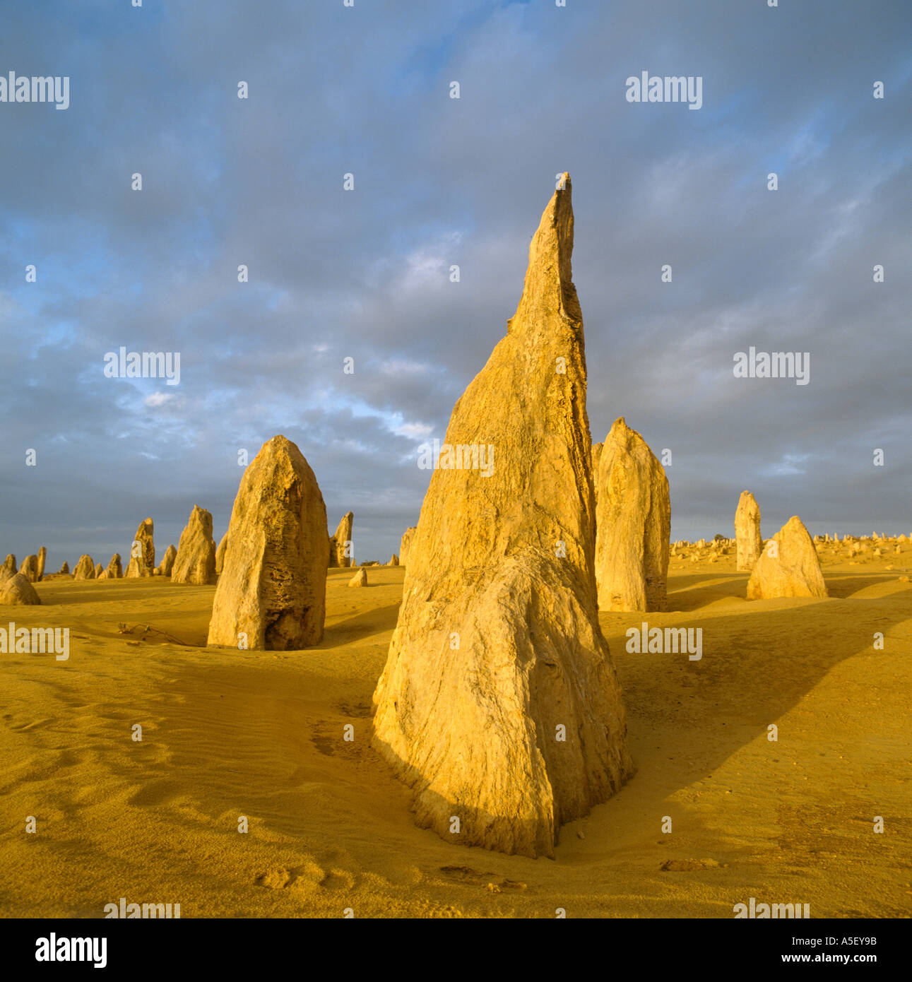 The Pinnacles in the early evening after a storm, Nambung National Park, Western Australia, Australia - Stock Image