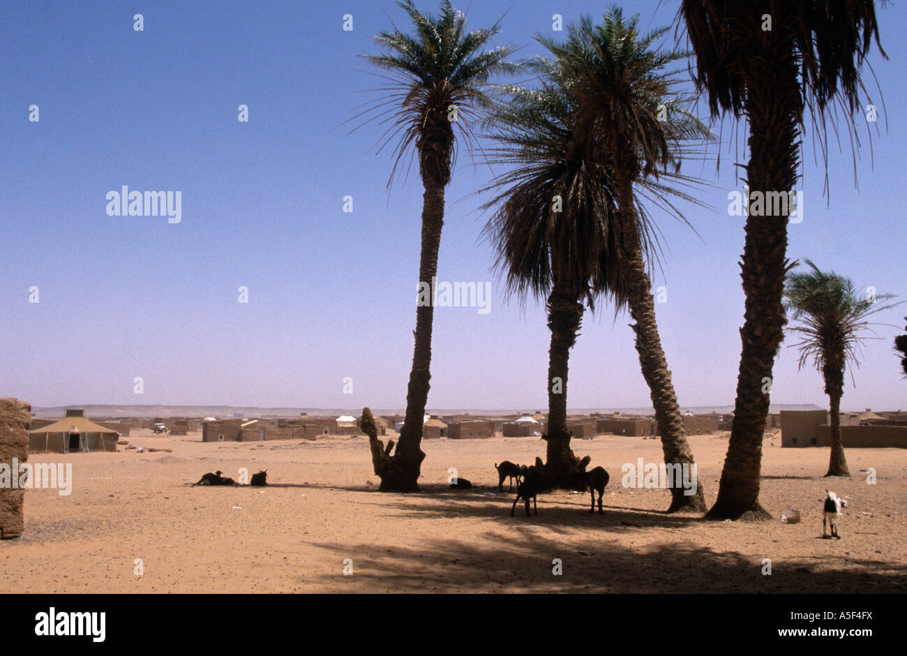 A scene of the Saharawi refugee camp in Tindouf Western Algeria - Stock Image