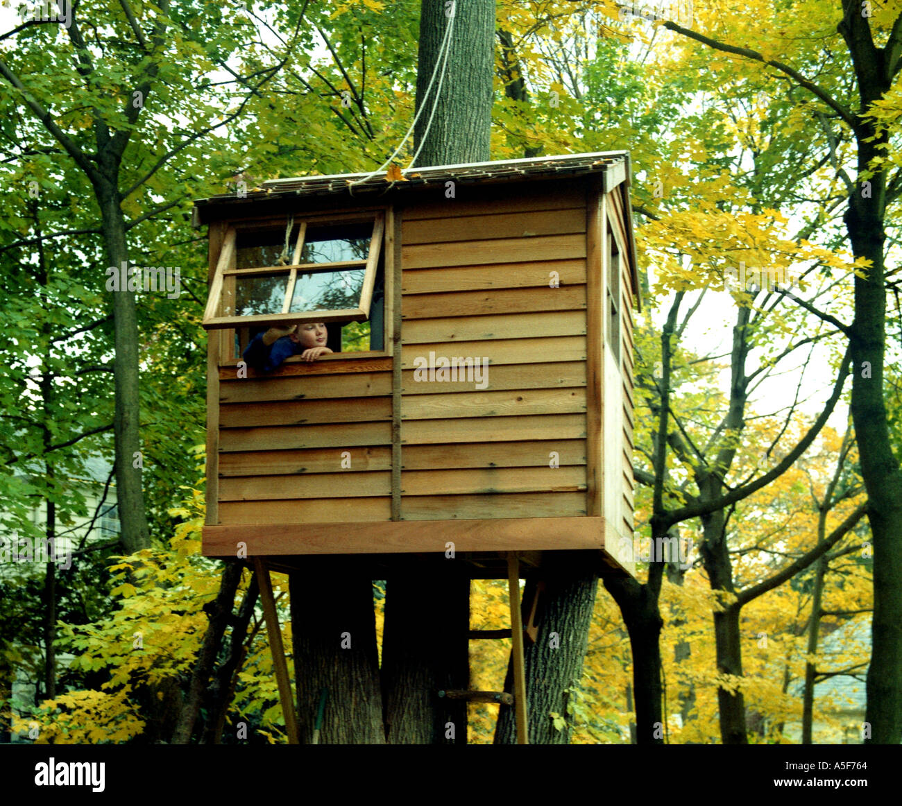 Child looking out of the window of a tree house Stock Photo