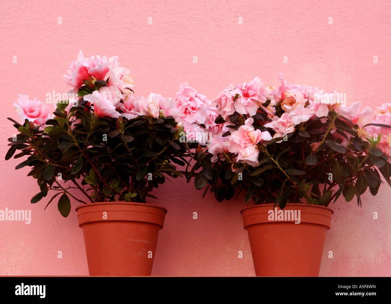 Two Identical Flowers Stock Photos & Two Identical Flowers Stock ...