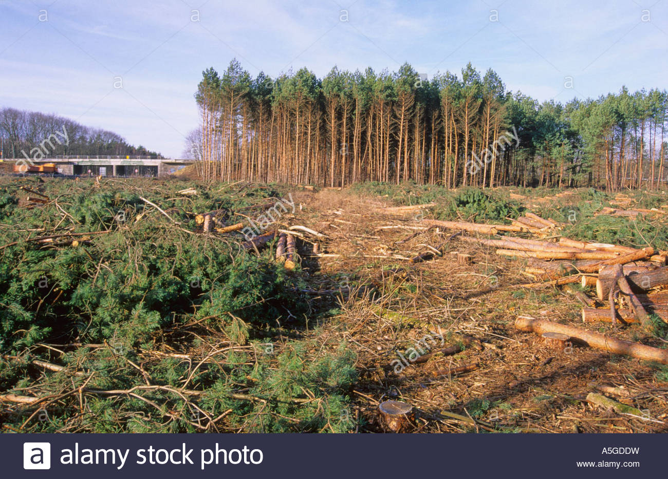 Clear cutting for broadening a driveway of motorway A 14 near Naunhof Germany Stock Photo