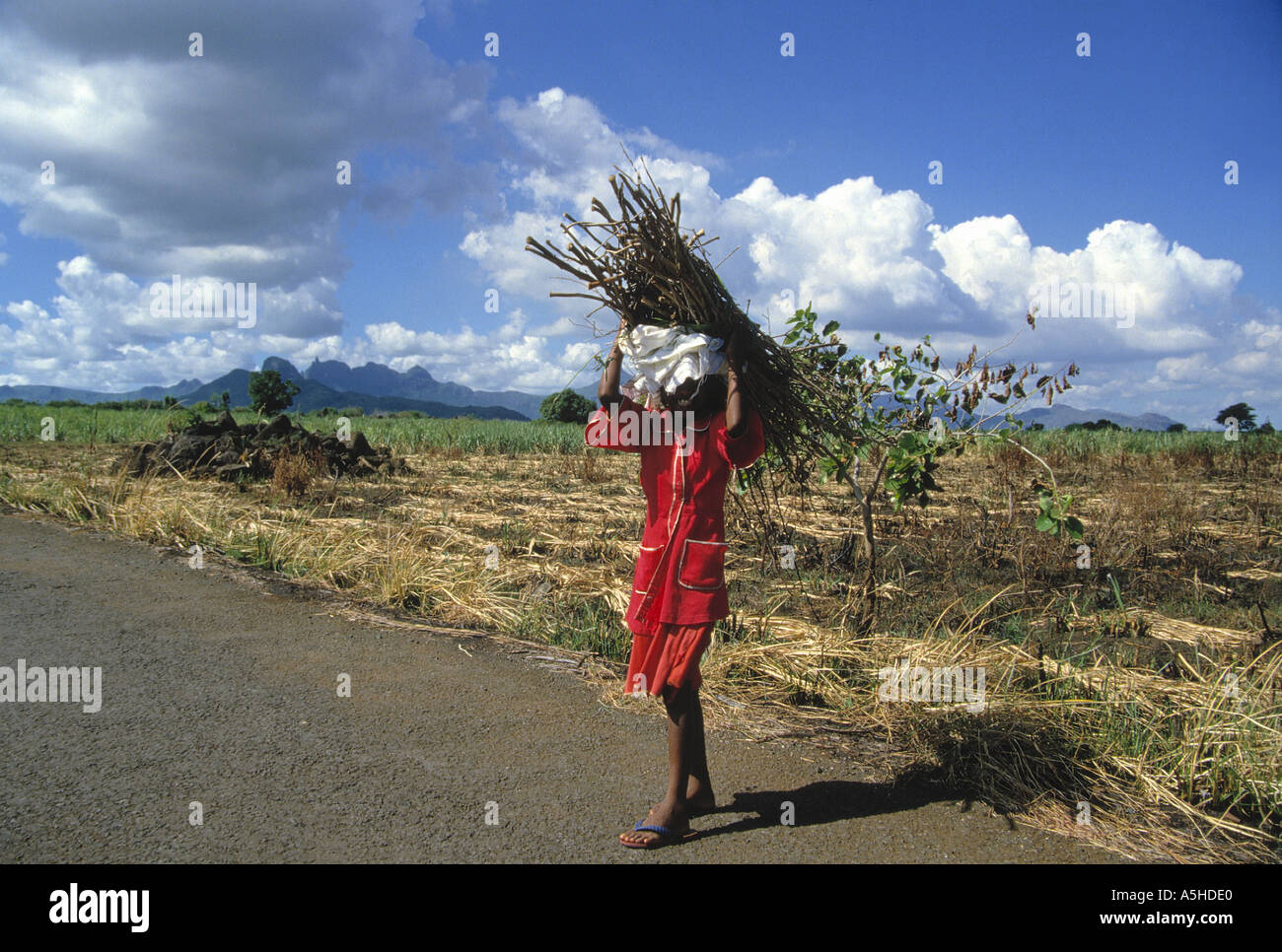 portrait of girl carrying firewood mauritius - Stock Image