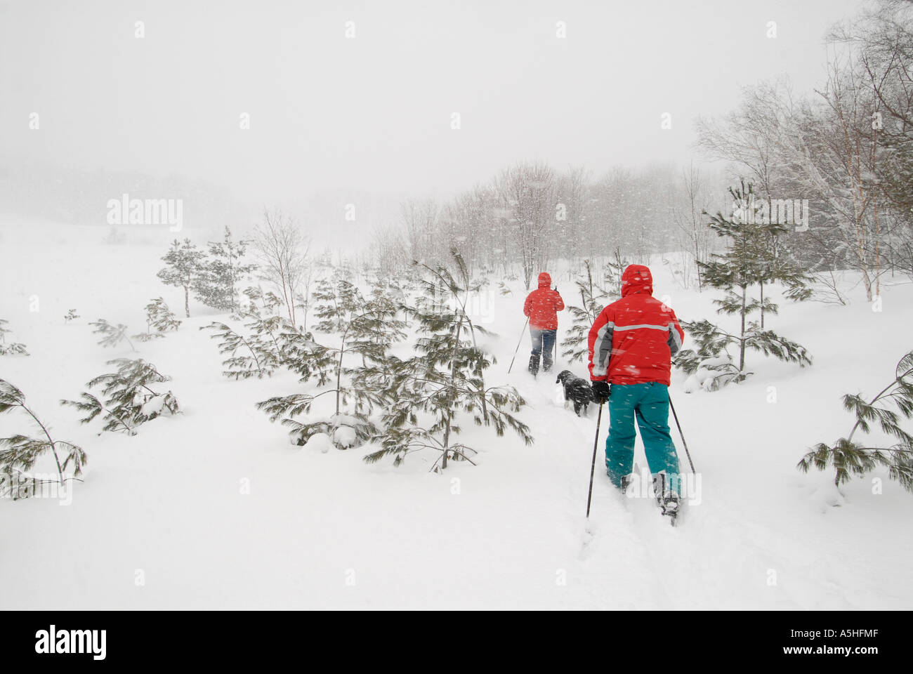Winter landscape cross country skiing - Stock Image