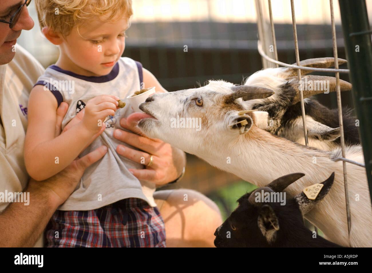 Kid feeding a goat at the Illinois State Fair in Springfield Illinois - Stock Image