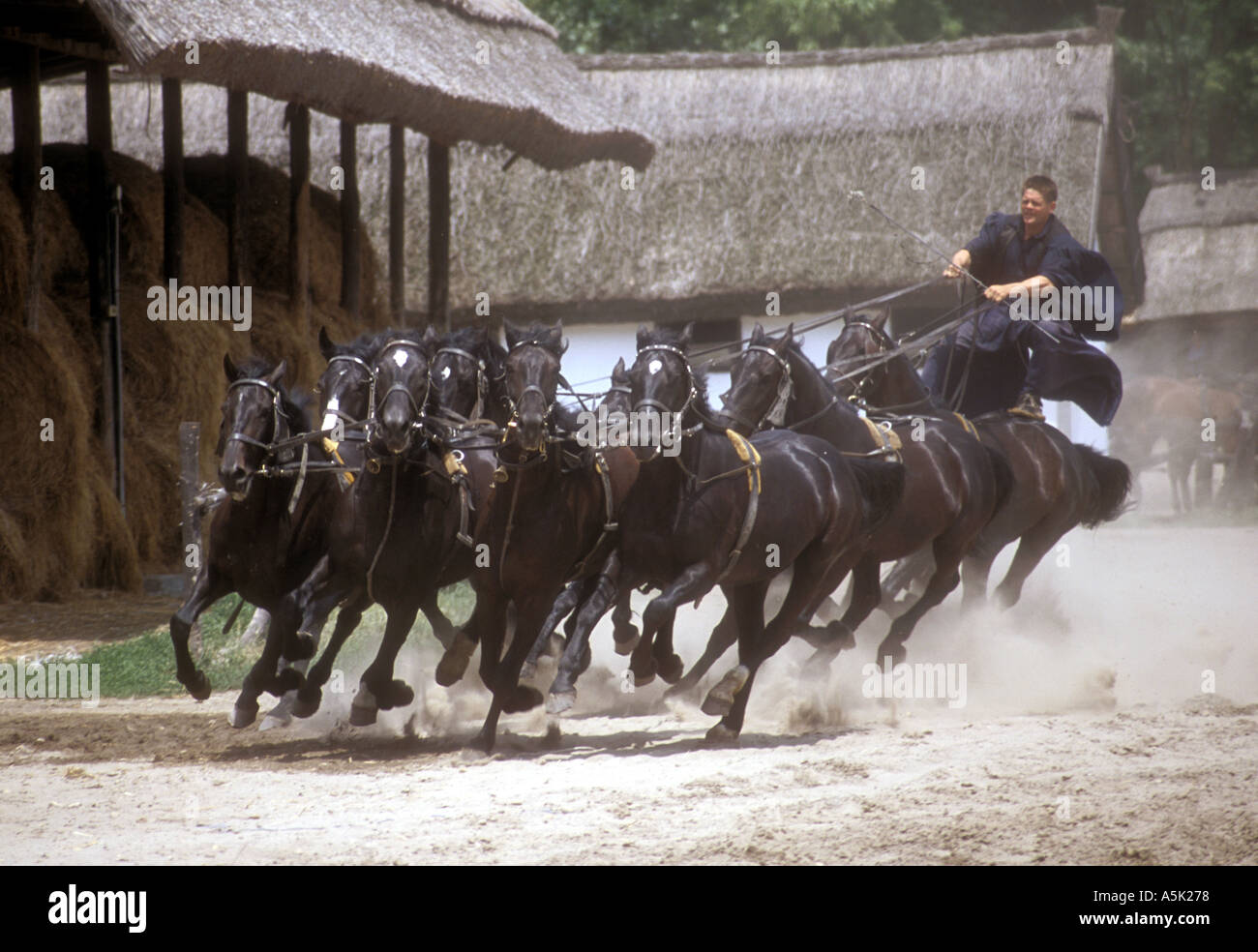 Riding ten horses at a time - Stock Image