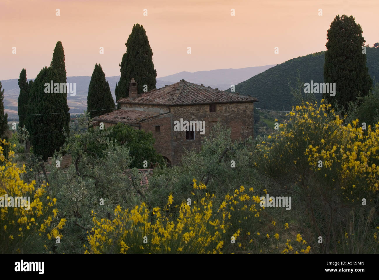 Country house in the midst of cypresses and blooming broom bushes near Montalcino, Tuscany, Italy - Stock Image