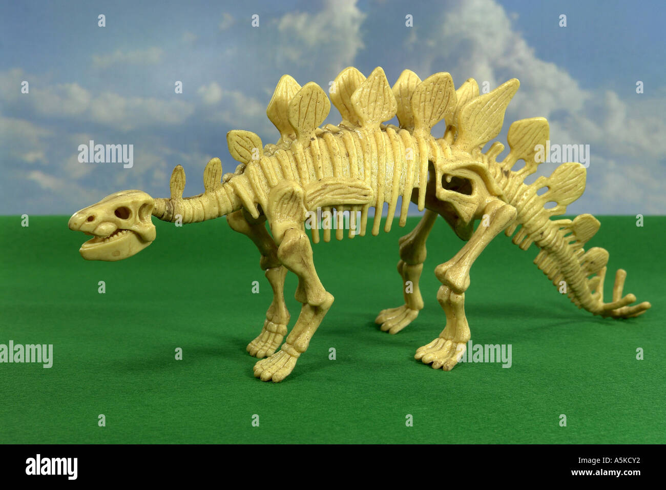 The Stegosaurus is called also plate lizard and in the jurassic period occurred. Its length amounted to approx. 8 m, the height - Stock Image