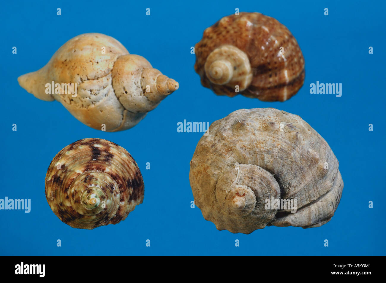 stoneware pendant blue snail shell motif