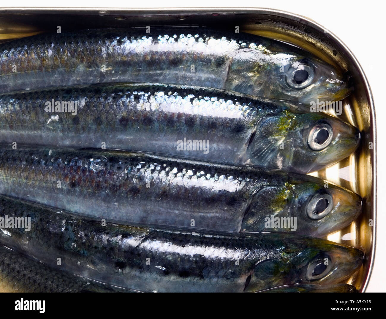 Can of sardines crammed together - Stock Image