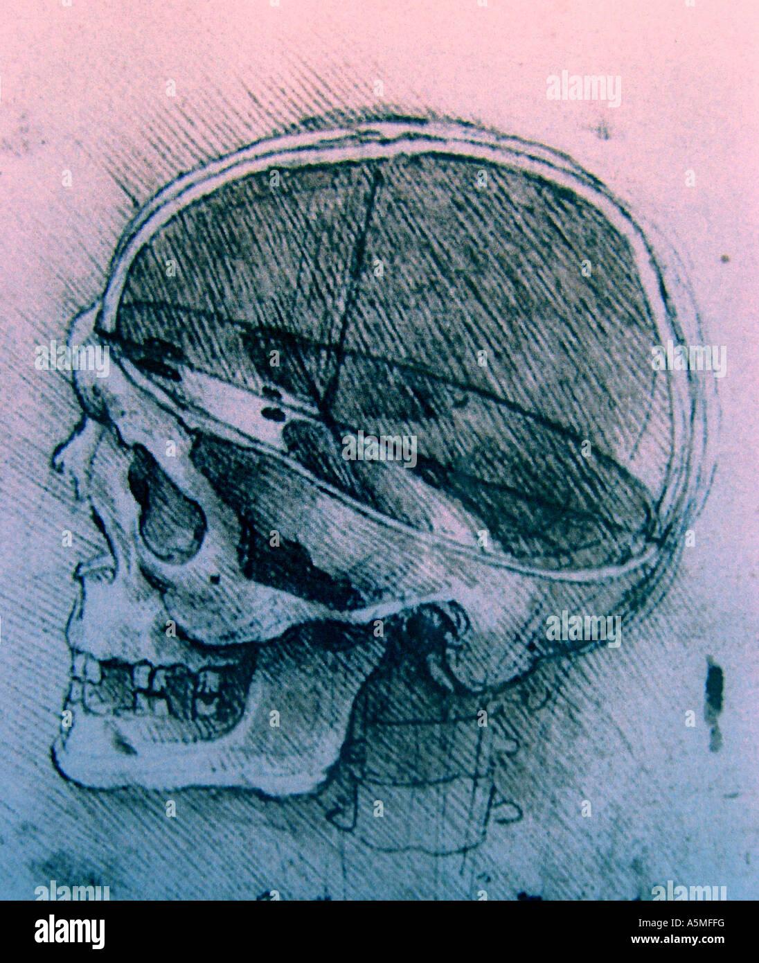 Anatomische Zeichnung von Leonardo da Vinci Medizinische Studien des ...