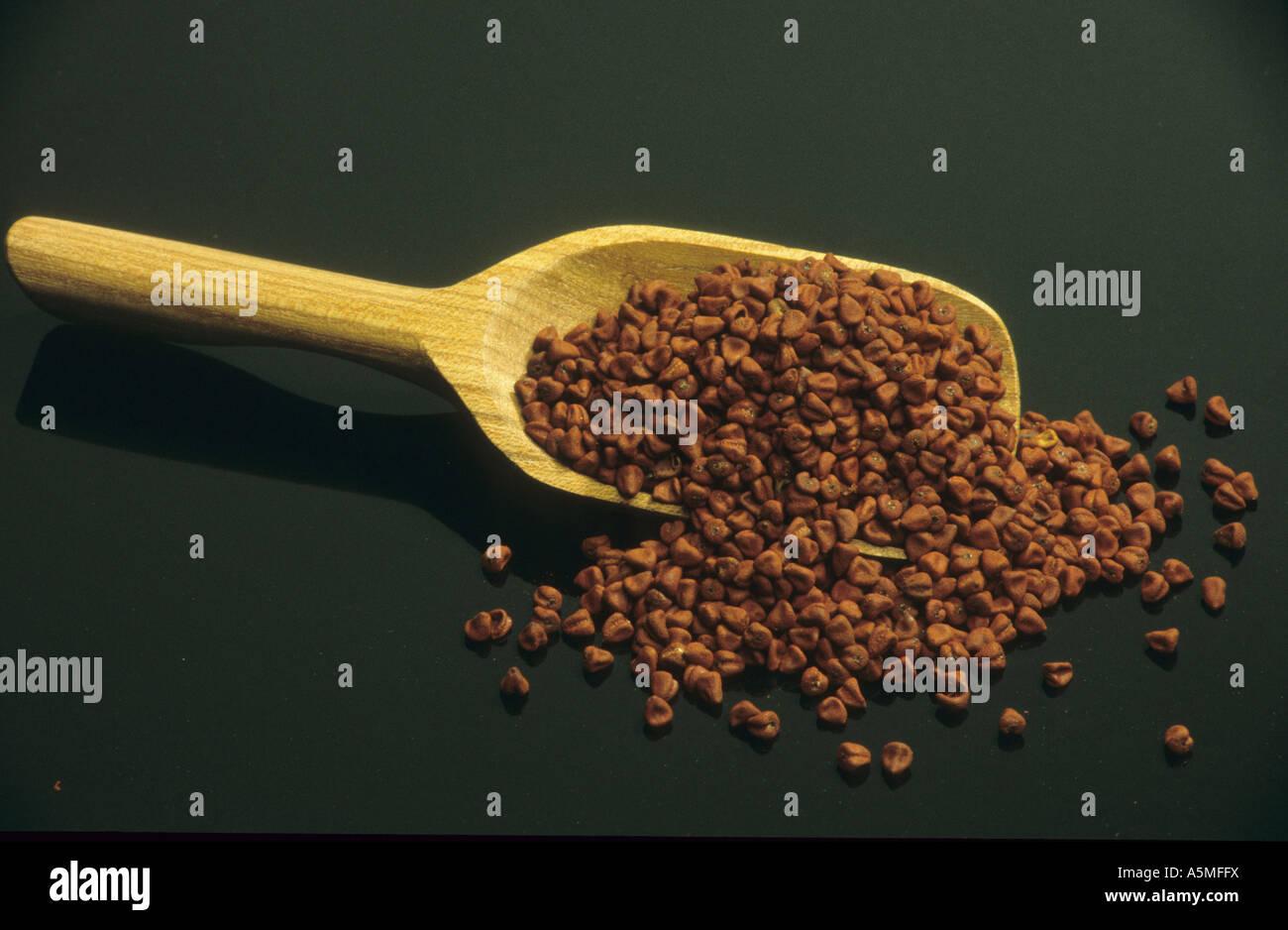 Annatto Annato Currysamen Bixa orellana Samen Saat Handelsform Körner seme seed corns Heilpflanzen Pflanze - Stock Image