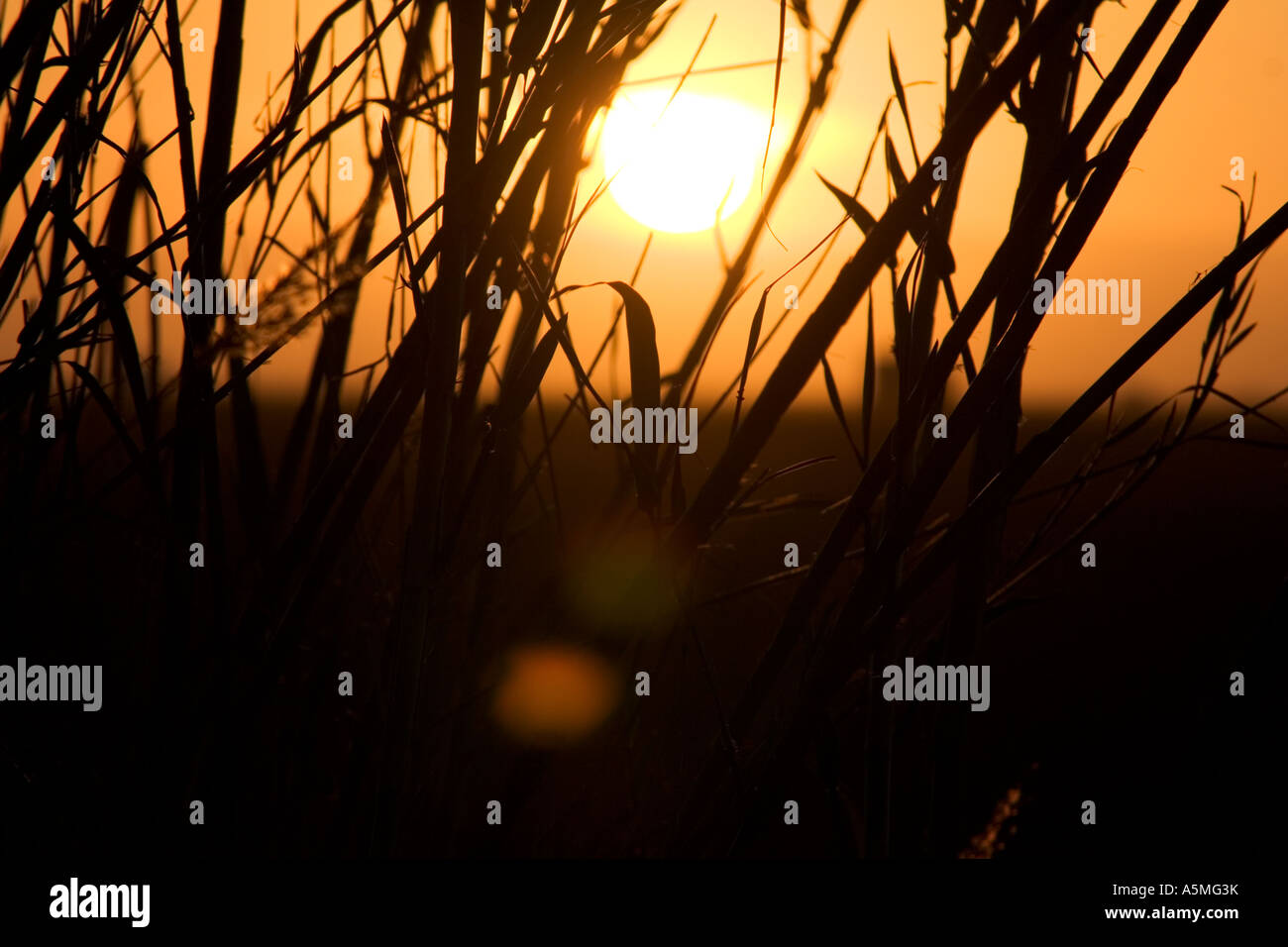 Golden sunset framed by reeds outside a Spanish City. - Stock Image