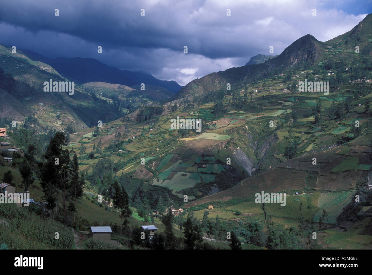 Agricultural land on mountain slopes above 2000 meters Cordillera real Andes mountains Sorata Yungas region Bolivia - Stock Image