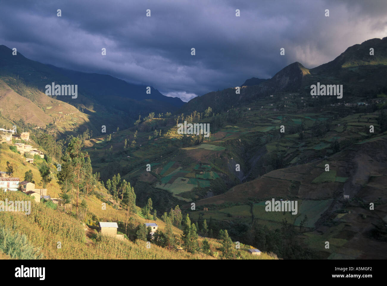 Agricultural land on mountain slopes abover2000 meters at Sorata Yungas region Cordillera real Andes mountains Bolivia - Stock Image