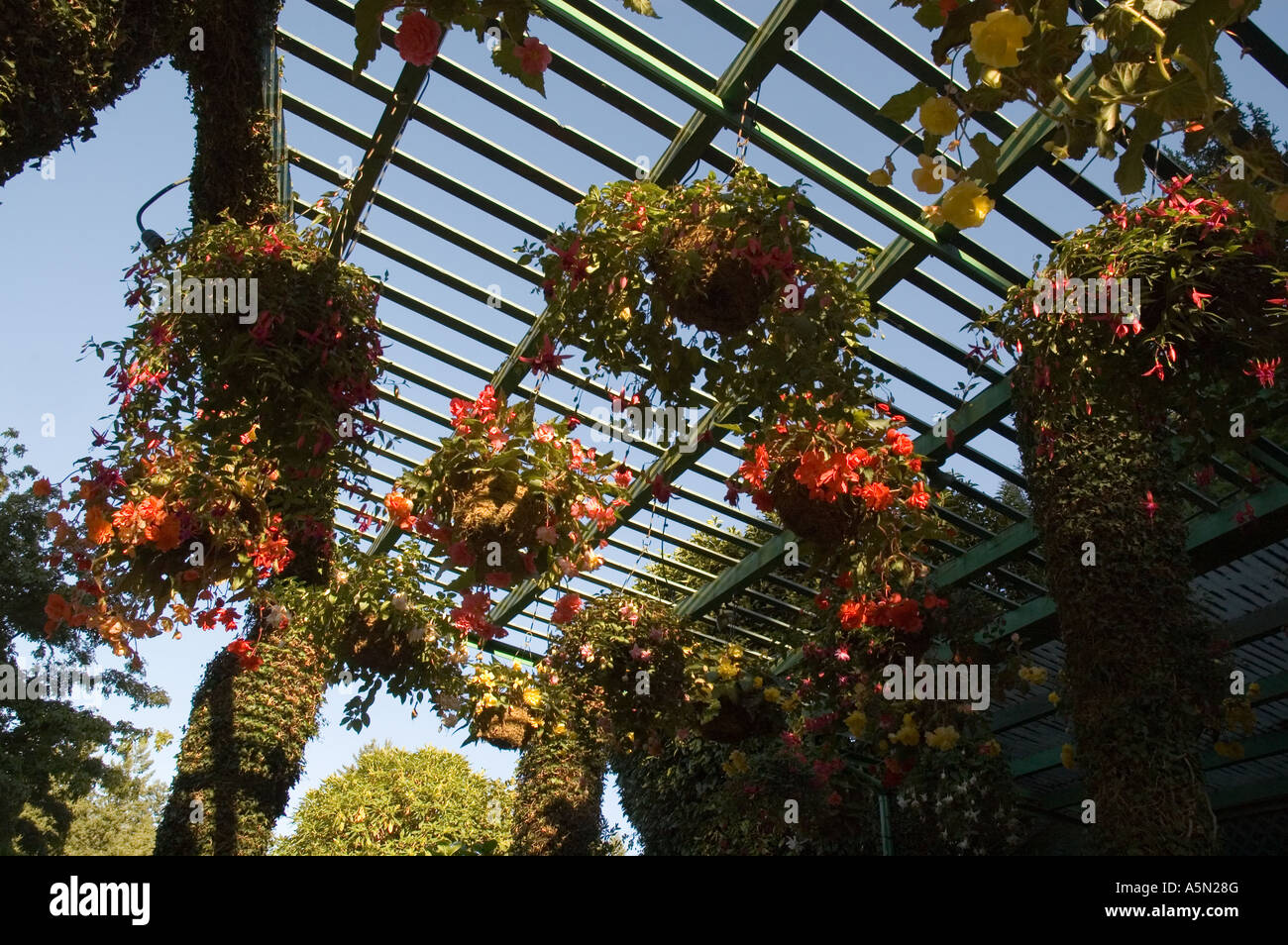 hanging baskets at The Butchart Gardens on Vancouver Island near ...