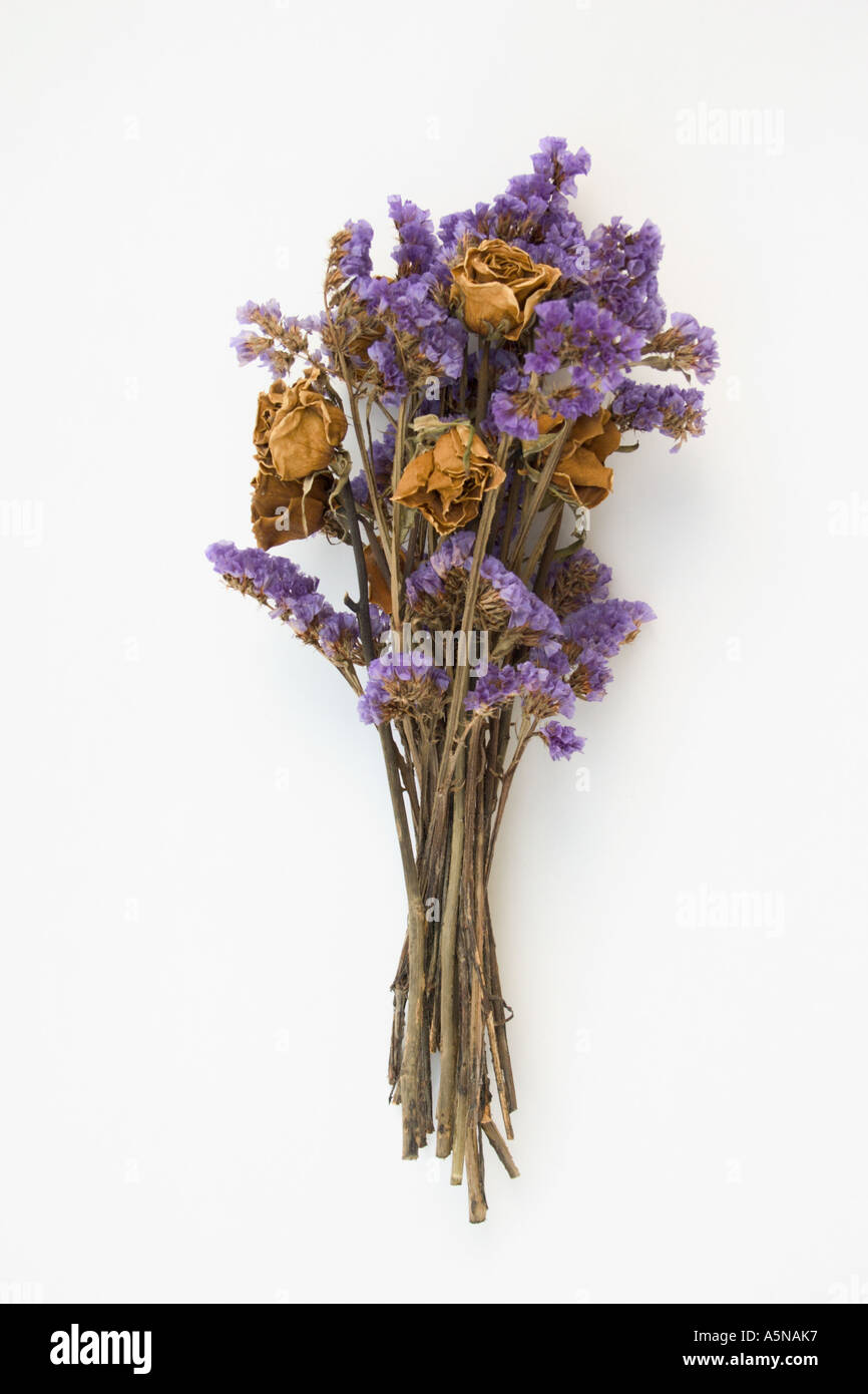 dried dead rose bouquet Stock Photo: 6487222 - Alamy