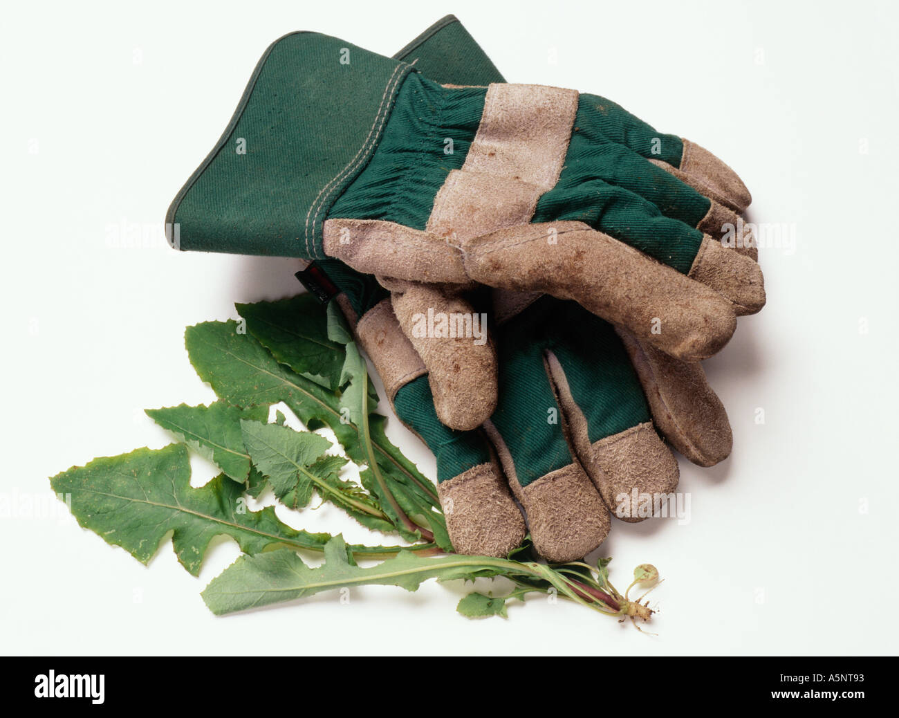 Gardening gloves and weeds - Stock Image
