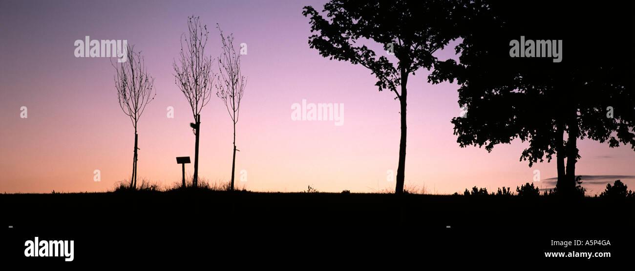 Trees at twilight Willen Milton Keynes England - Stock Image
