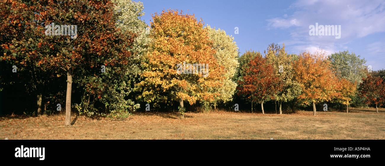Autumn trees Willen Milton Keynes - Stock Image
