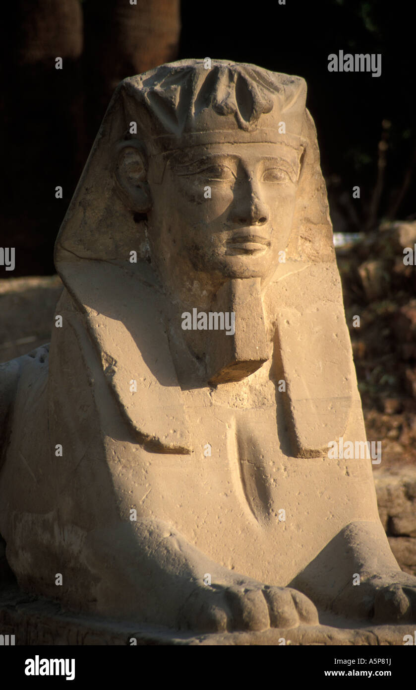 Human headed sphinx in the Temple of Luxor, Luxor, Egypt - Stock Image