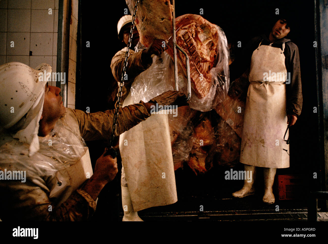 HALF SIDES OF BEEF ARE TAKEN FROM THE SLAUGHTER HOUSE TO INDIVIDUAL BUTCHER SHOPS in BUENOS AIRES ARGENTINA - Stock Image