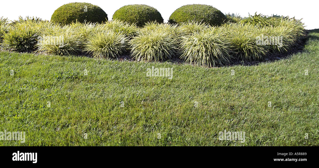 Grass Shrubs Bushes Stock Photo 2111624 Alamy