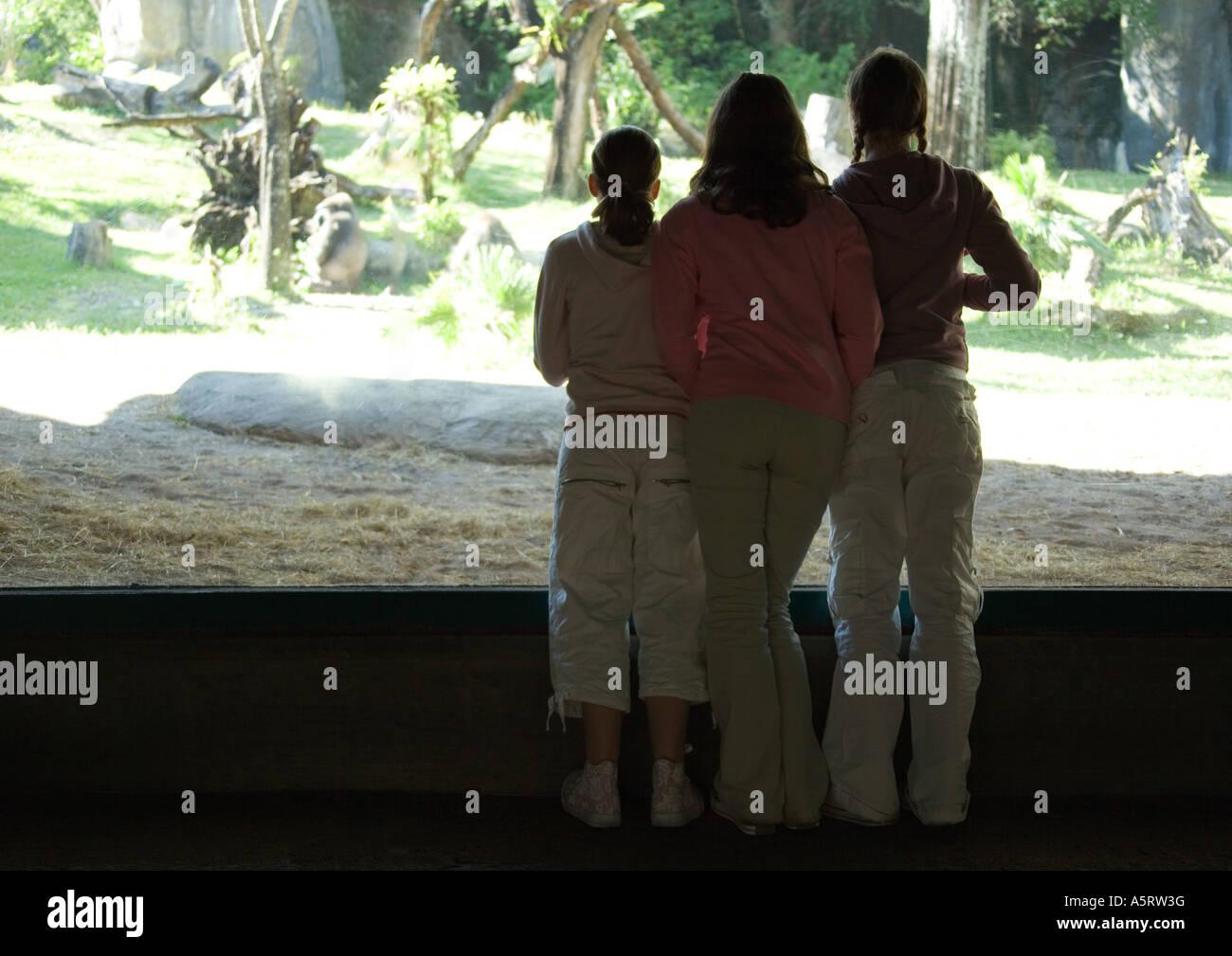 Three girls looking through window in zoo - Stock Image