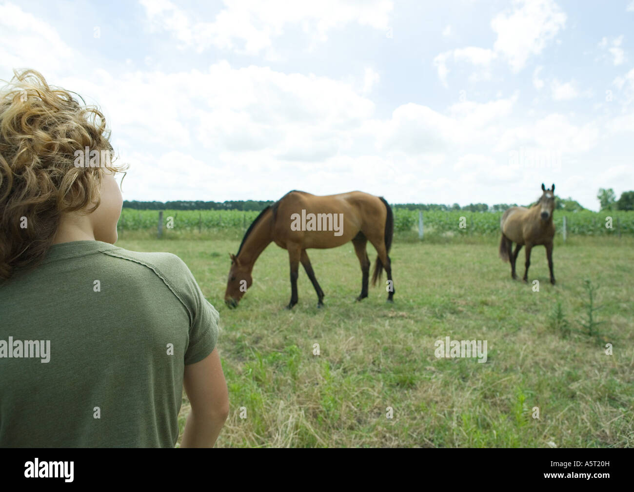 Boy watching horses in pasture - Stock Image