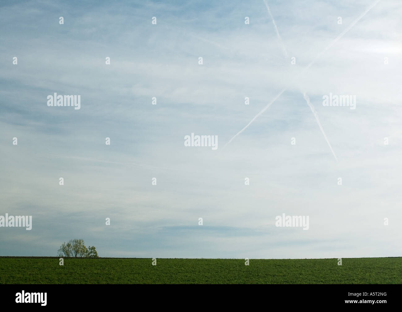 Sky with vapor trails forming 'X' and tree in distance - Stock Image
