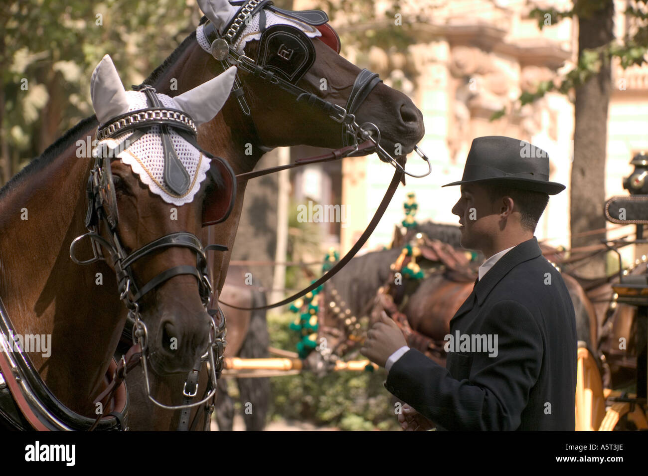 A pair of beautifully decorated horses ready for the parade at the annual feria in Malaga, Spain - Stock Image