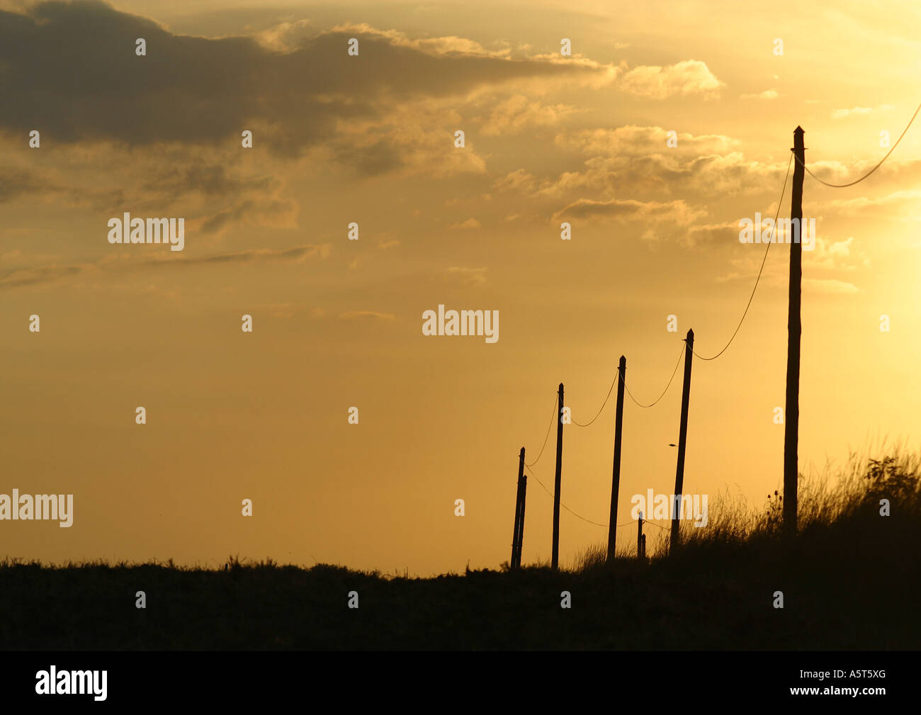 Telephone posts silhouetted at sunset - Stock Image