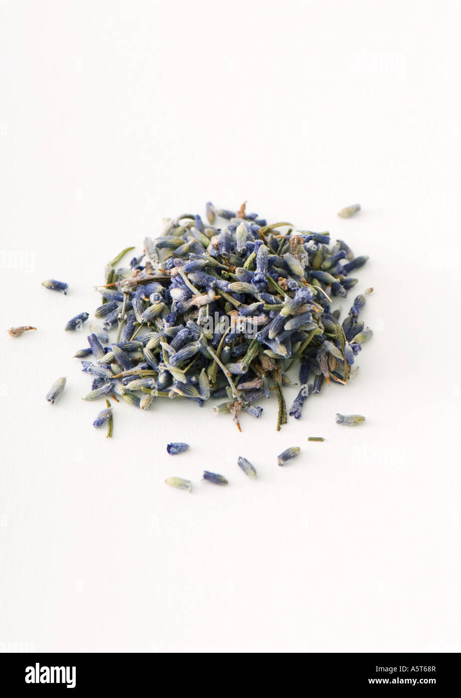 Dried lavender flowers - Stock Image